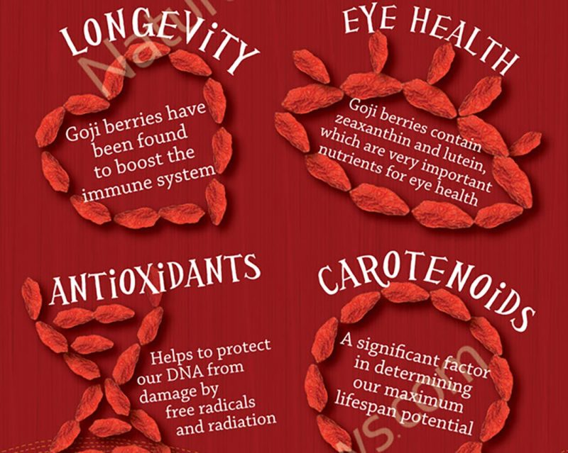 goji Berries Infographic